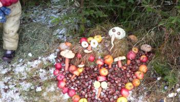 Zdobení vánočního stromečku pro zvířátka